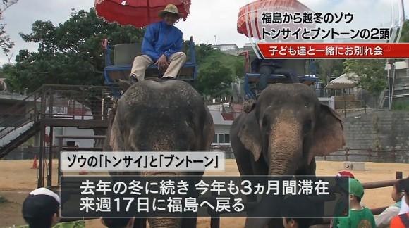 こどもの国で越冬したゾウの旅の安全祈る