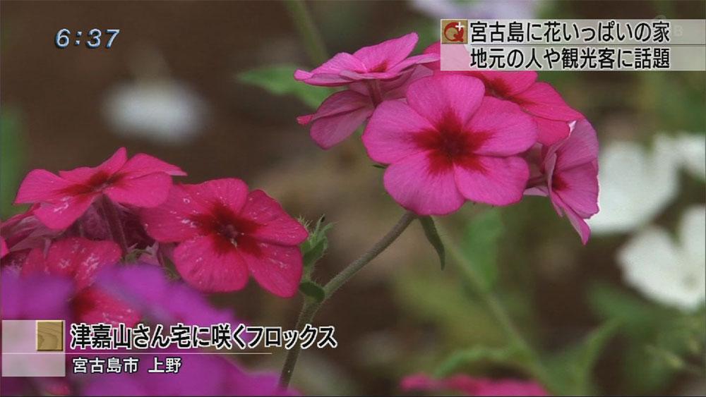 上野に花いっぱいのお宅