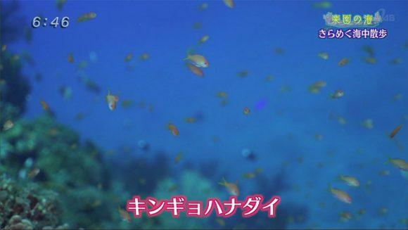 楽園の海 ゴールデンウィークダイビング!01