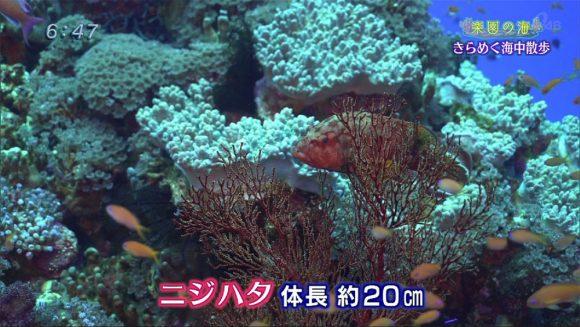 楽園の海 ゴールデンウィークダイビング!02
