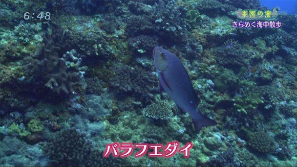 楽園の海 ゴールデンウィークダイビング!03