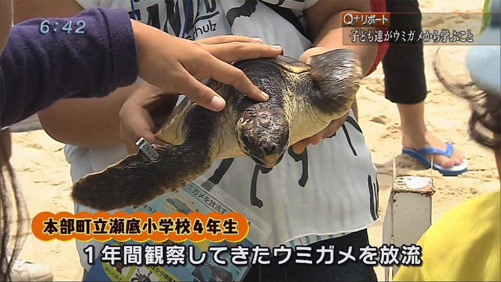 Q+リポート ウミガメの成長で自由研究!