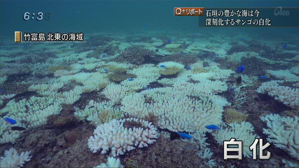 Q+リポート 深刻化するサンゴの白化現象