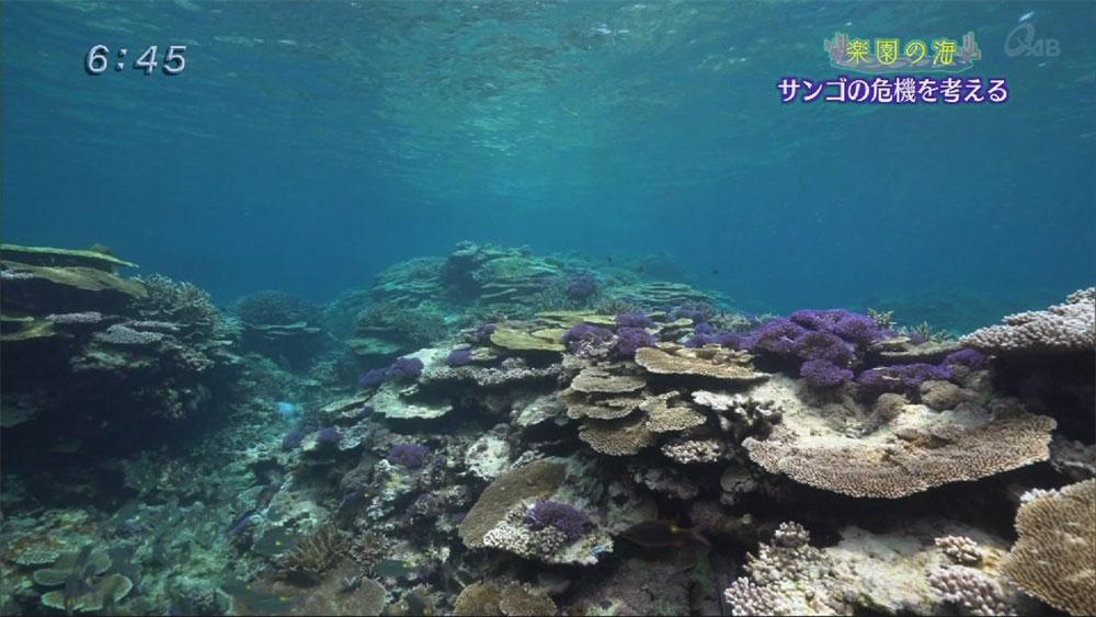 楽園の海 サンゴの危機を考える