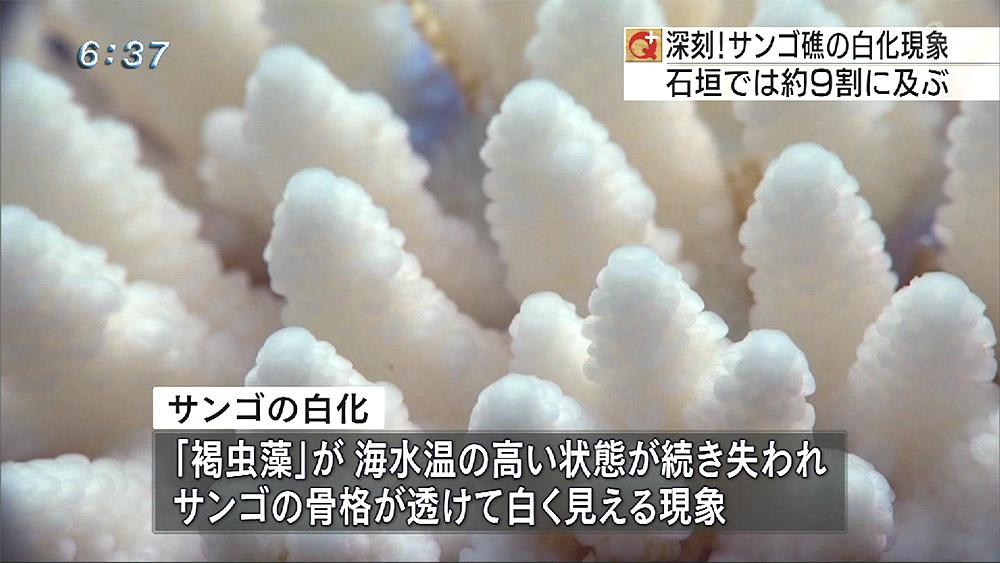 環境省調査 石西礁湖のサンゴ 9割白化