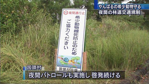希少生物守るためやんばるの林道で交通規制始まる