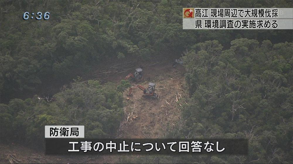 高江で大規模伐採 工事用道路造られる
