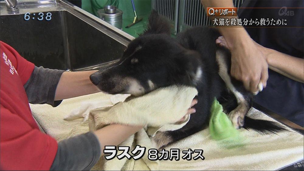 Q+リポート犬猫を殺処分から救う為に