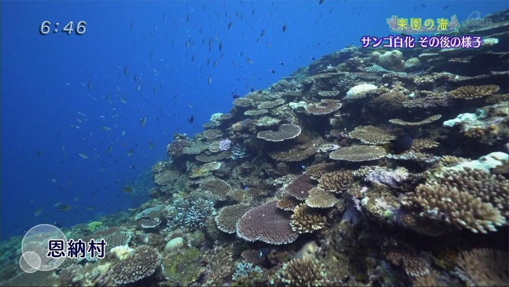 楽園の海 サンゴの白化 その後の様子