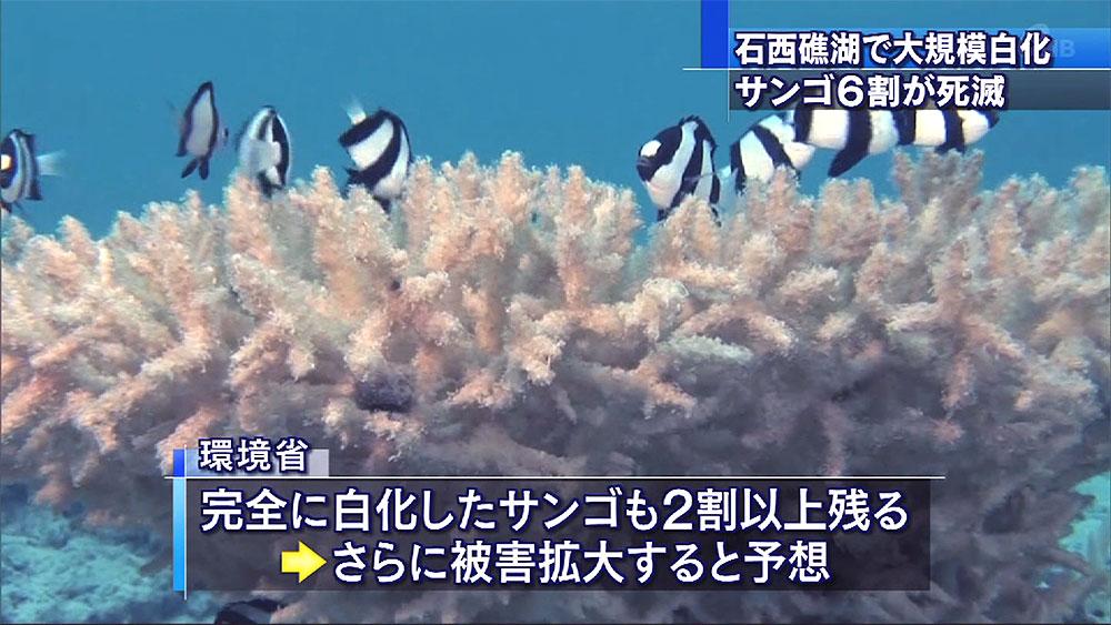 環境省調査 石西礁湖サンゴ 白化の6割が死滅