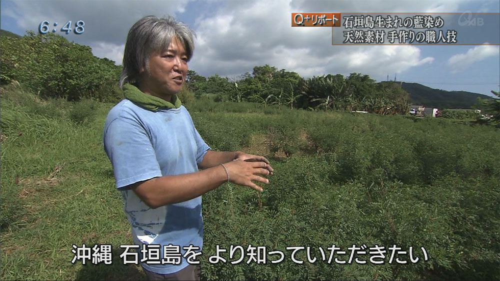 Q+リポート 「島で生まれる藍」島藍農園