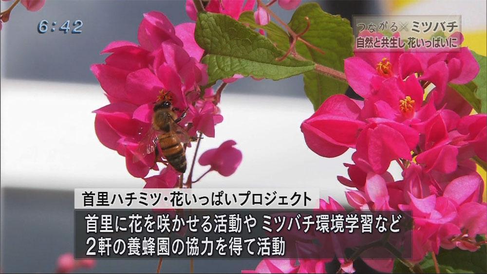 シリーズつながる ミツバチの力で花いっぱいに!!