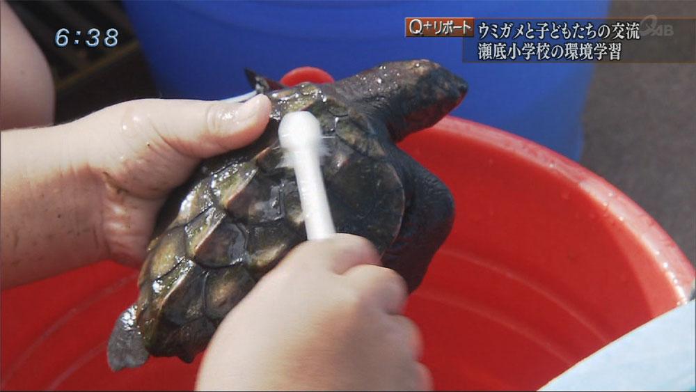 Qプラスリポート ウミガメを守りたい 瀬底小学校の環境学習