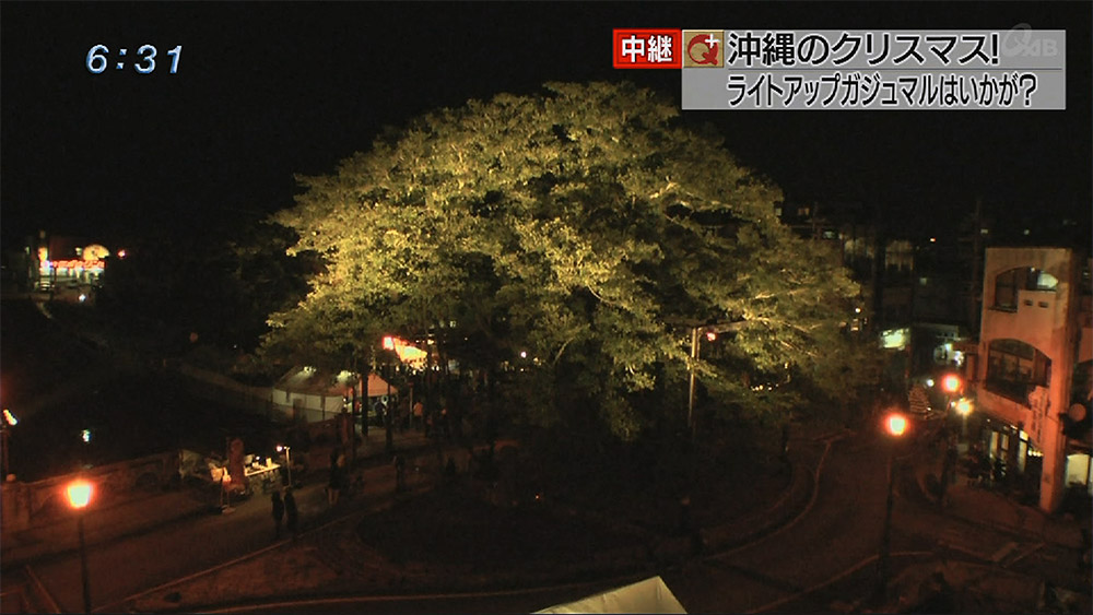 中継 沖縄のクリスマス!ライトアップガジュマルはいかが?
