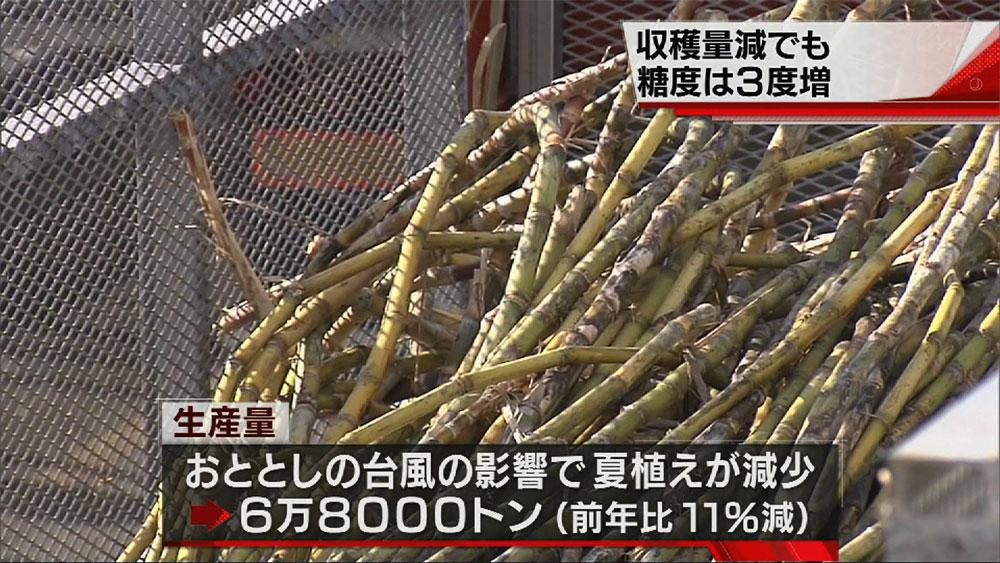 石垣島で製糖始まる