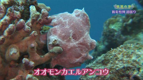 楽園の海 2017初潜り