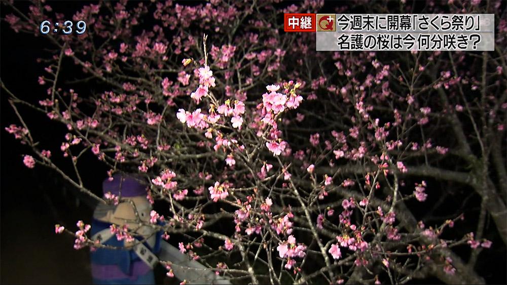 中継 日本の春はここから始まる!?