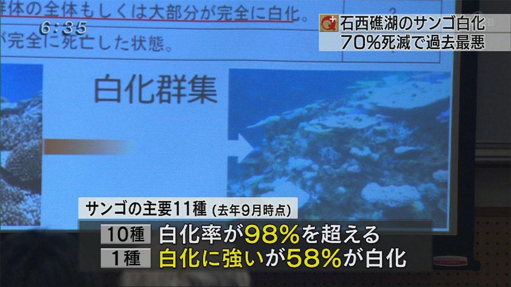 石西礁湖 サンゴ白化 過去最悪