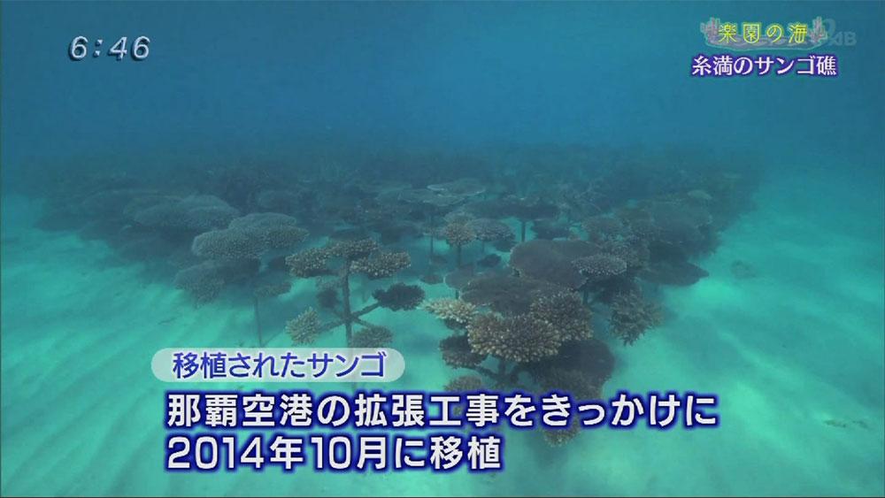 楽園の海 糸満のサンゴ礁