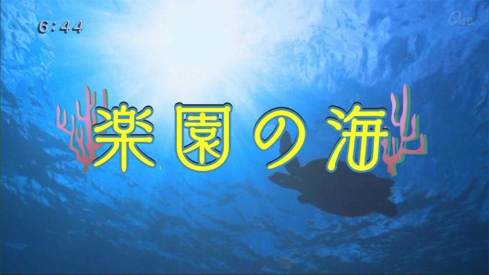 楽園の海 水底大好き!生き物特集