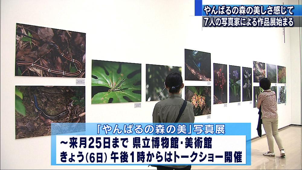 やんばるの森の美 写真展