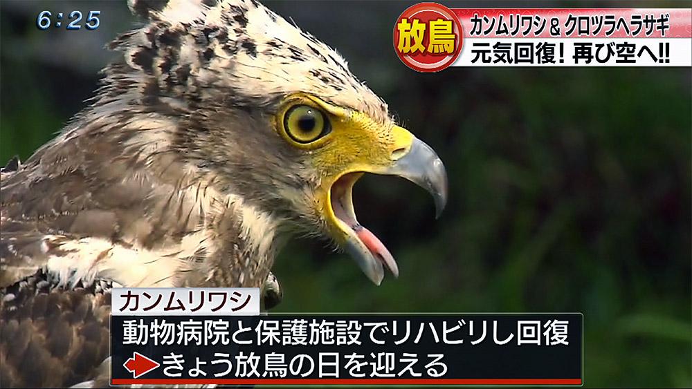 保護された野鳥 再び空に
