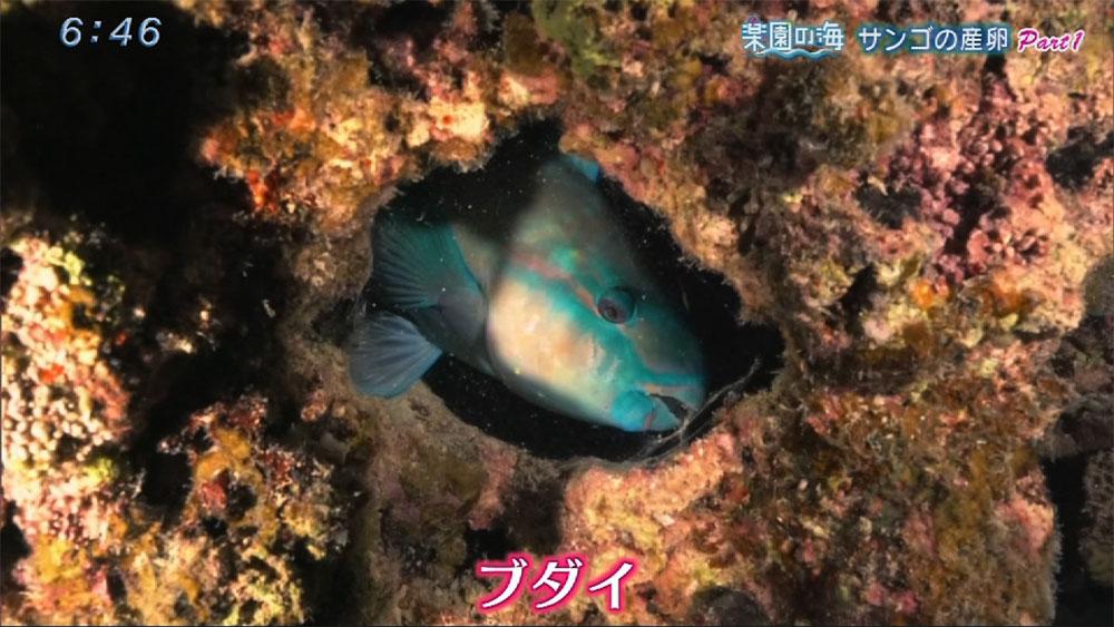 楽園の海 サンゴの産卵2017 Part1
