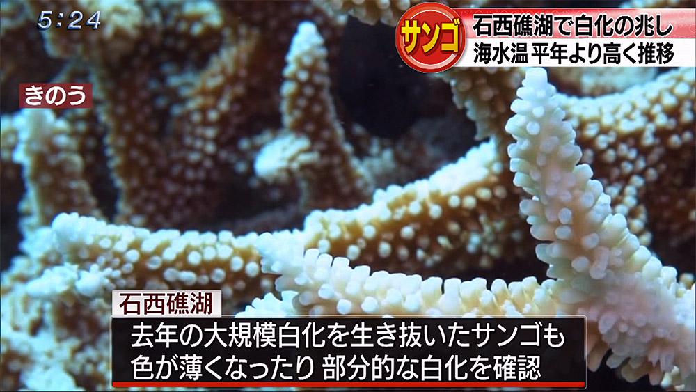 石西礁湖 今年もサンゴ白化の兆し