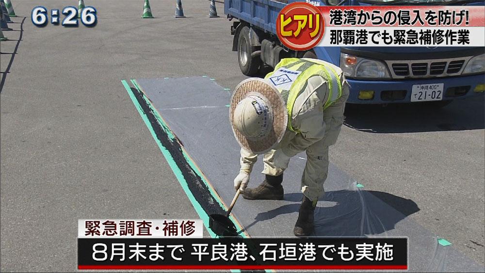 港湾へのヒアリ侵入防ぐ補修と調査開始