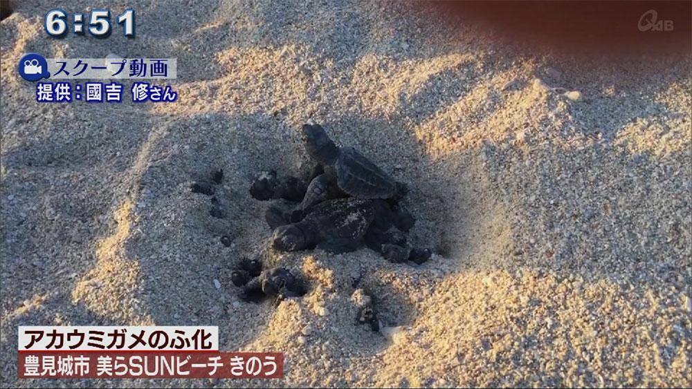 視聴者投稿動画 ウミガメのふ化