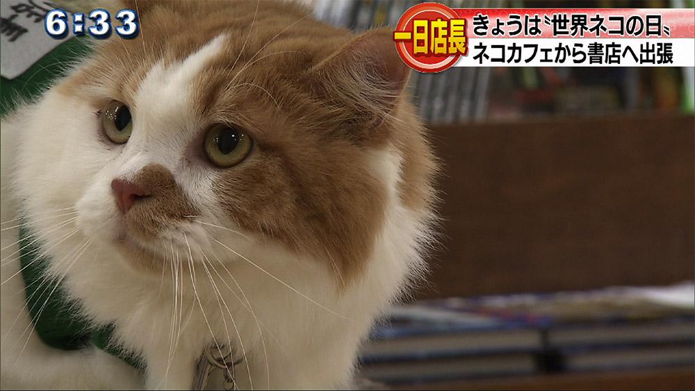 きょうは「世界ネコの日」本屋さんで一日ネコ店長!