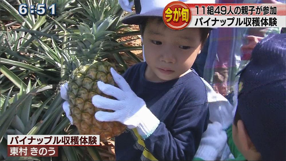 パイナップル親子収穫体験