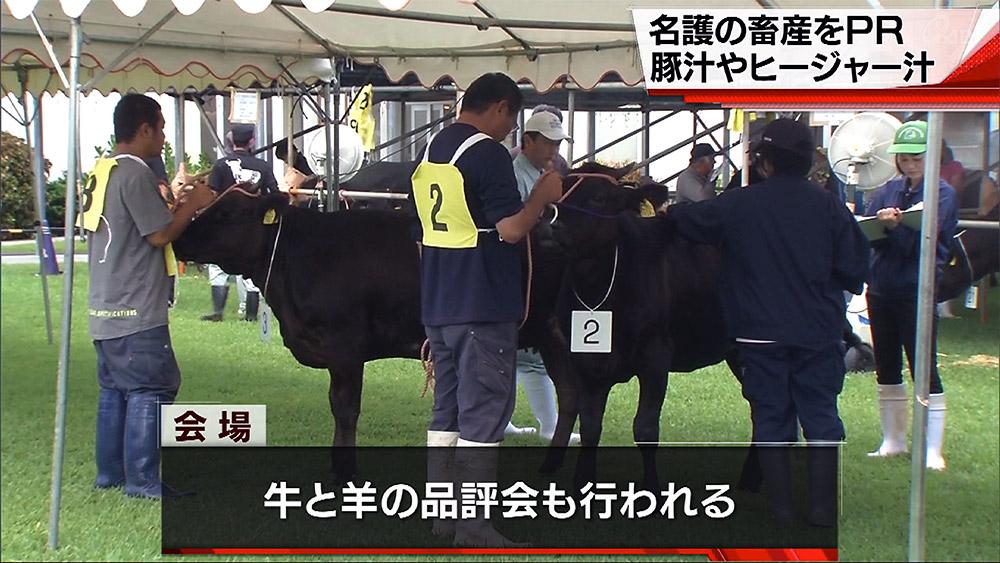 名護市で畜産まつり 牛や羊の品評会も