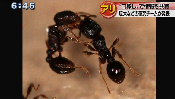 アリは口移しで情報を共有している!