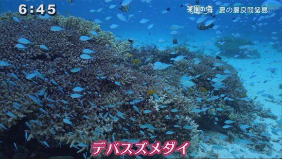 楽園の海 夏の慶良間諸島