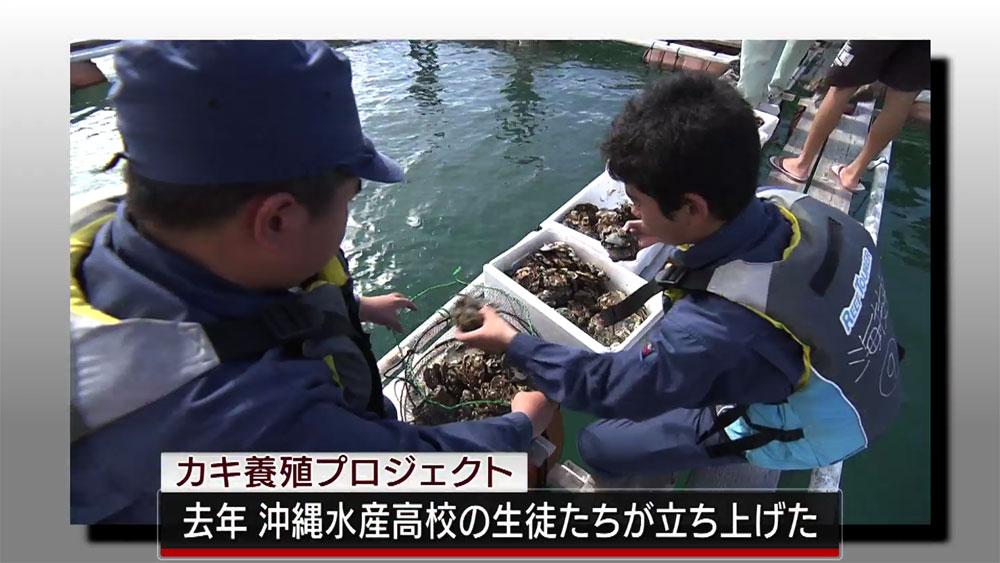 Qプラスリポート 「沖縄水産高校牡蠣合宿」