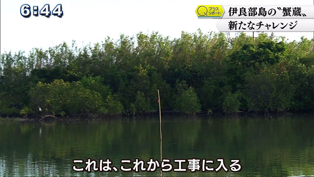 "Qプラスリポート 伊良部島の""蟹蔵"" 新たな挑戦"