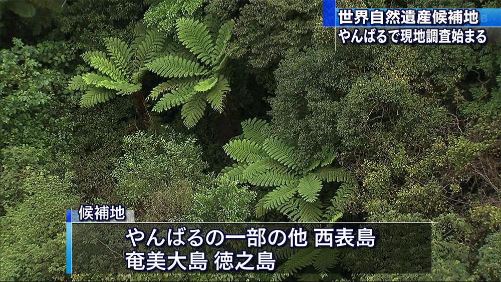 世界自然遺産 現地調査始まる