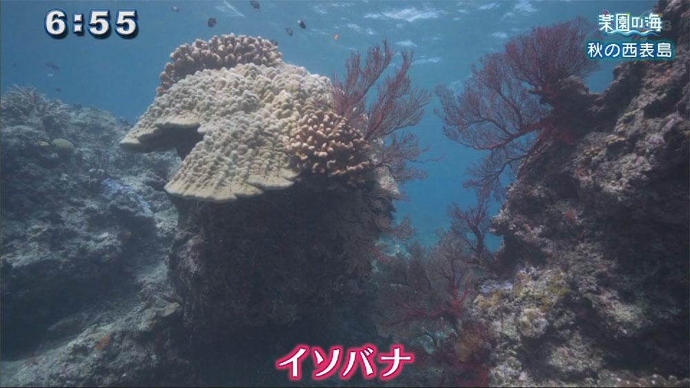 楽園の海 秋の西表島