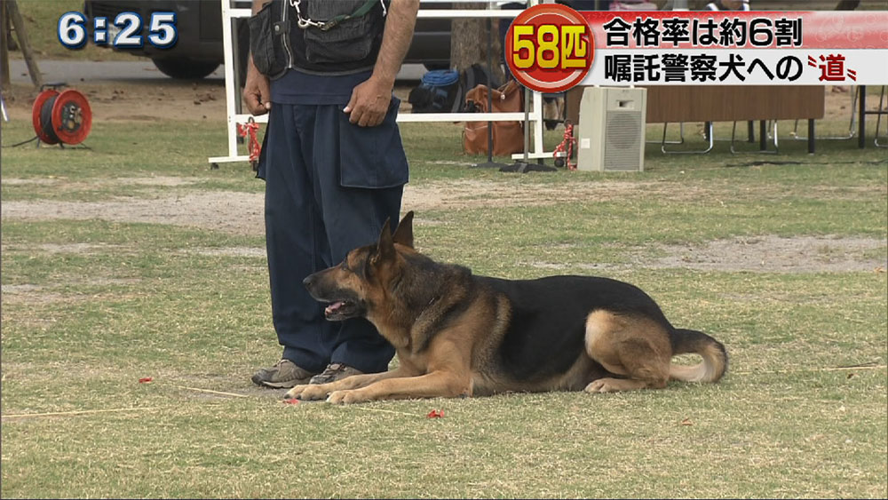 嘱託警察犬審査会に58匹が挑戦
