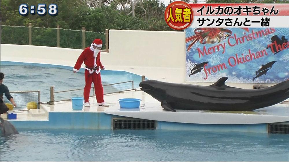 イルカショーにクリスマスバージョン開始