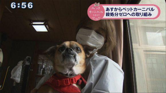 犬を救うボランティア団体の取り組み