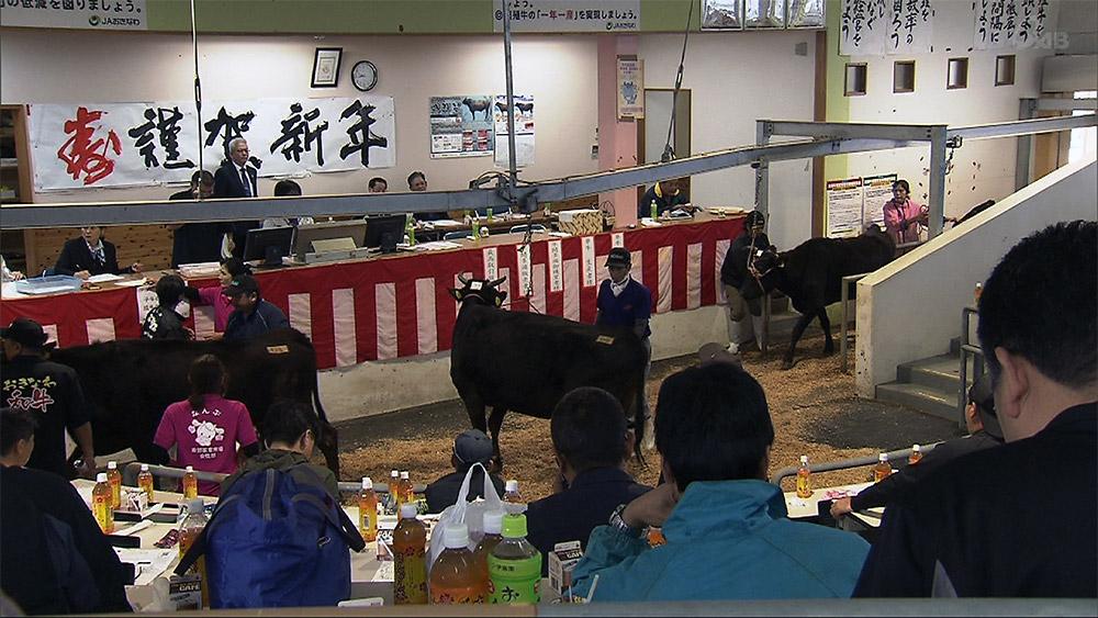 南部家畜市場で肉用牛初競り