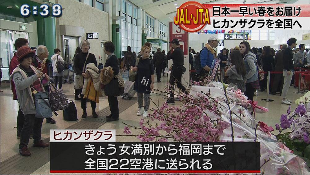 日本一早い桜を全国へ JALグループ発送式