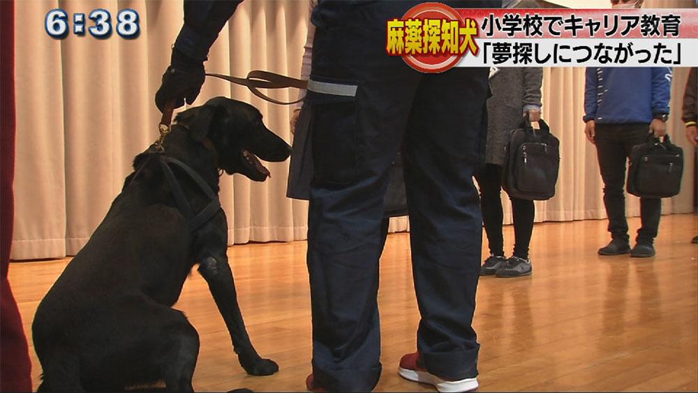 麻薬探知犬が小学校にやってきた