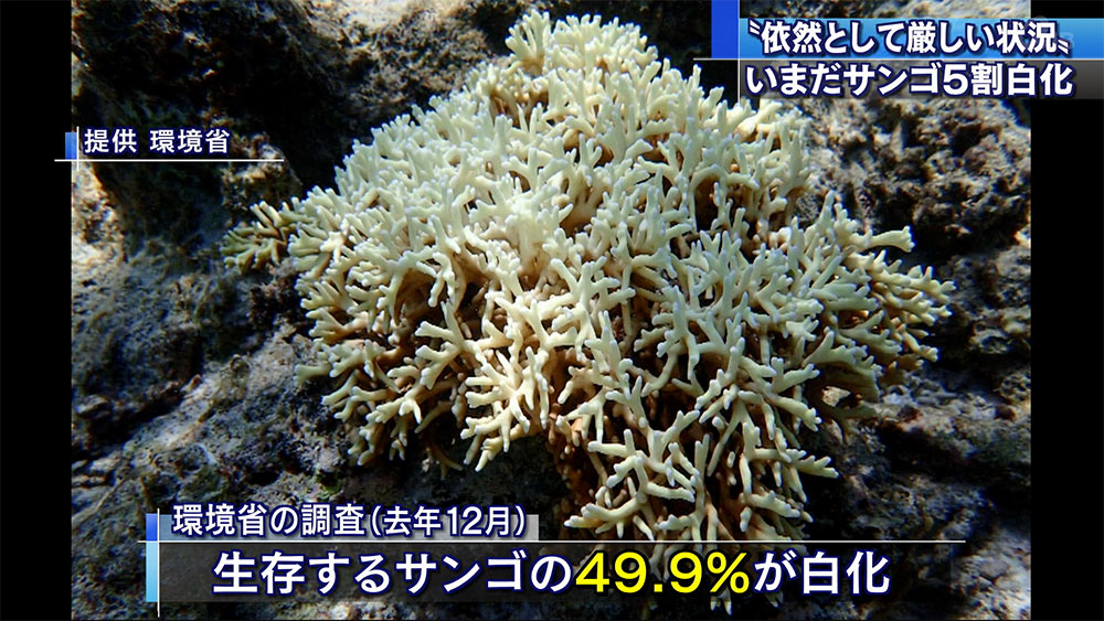 石西礁湖 いまだに5割白化