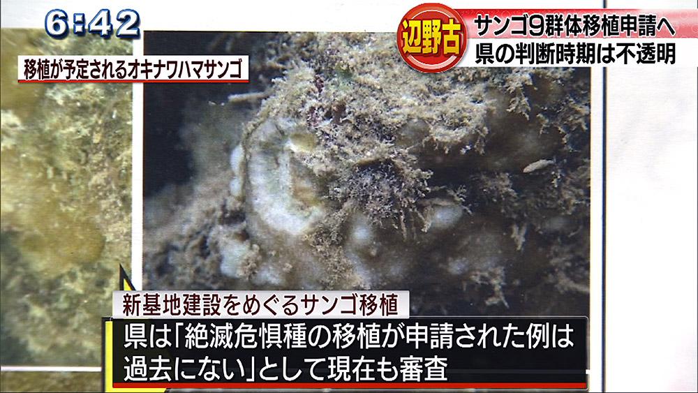 辺野古希少サンゴ 3件目の移植申請へ