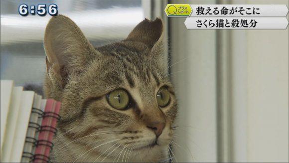 Qプラスリポート 取り組み知って さくら猫〜命を考える〜