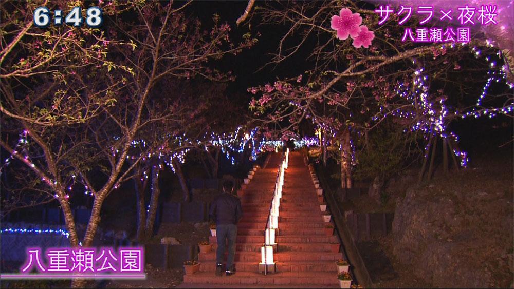 サクラ×夜桜 八重瀬公園を夜散歩
