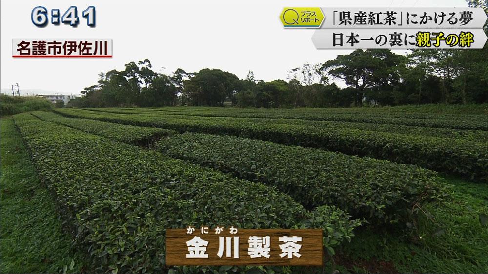 Qプラスリポート 「県産紅茶」にかける夢